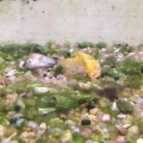 04 - Plusieurs poissons morts