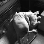 Gollum - Petite boule de Nu