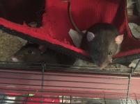 Harry et Dobby